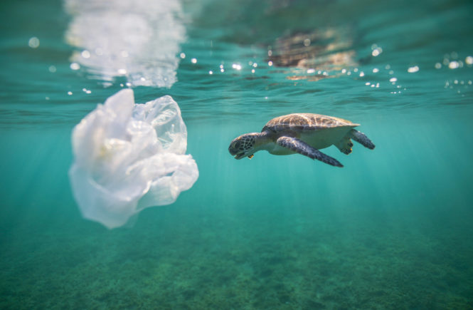 sea turtle with plastic bags